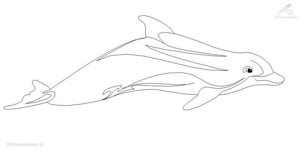 Ausmalbild: delphin-ausmalbild-7